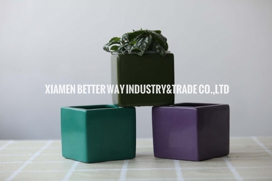 Purple Square Succulent Planters